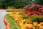 dallas botanical garden